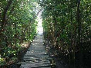 Beachwood mangrove nature reserve in kwazulu natal