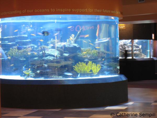 aquarium @ v&a waterfront