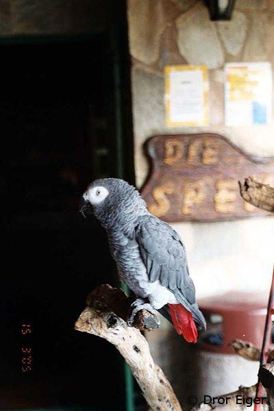 animal sanctuaries, hoedspruit