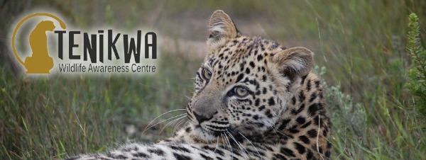 Tenikwa Animal Sanctuary Plettenberg Bay