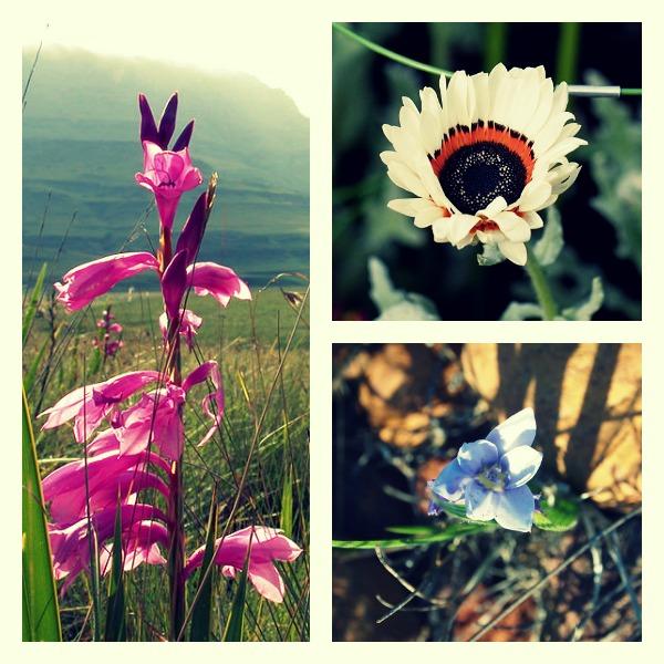 West Coast Wild Flowers