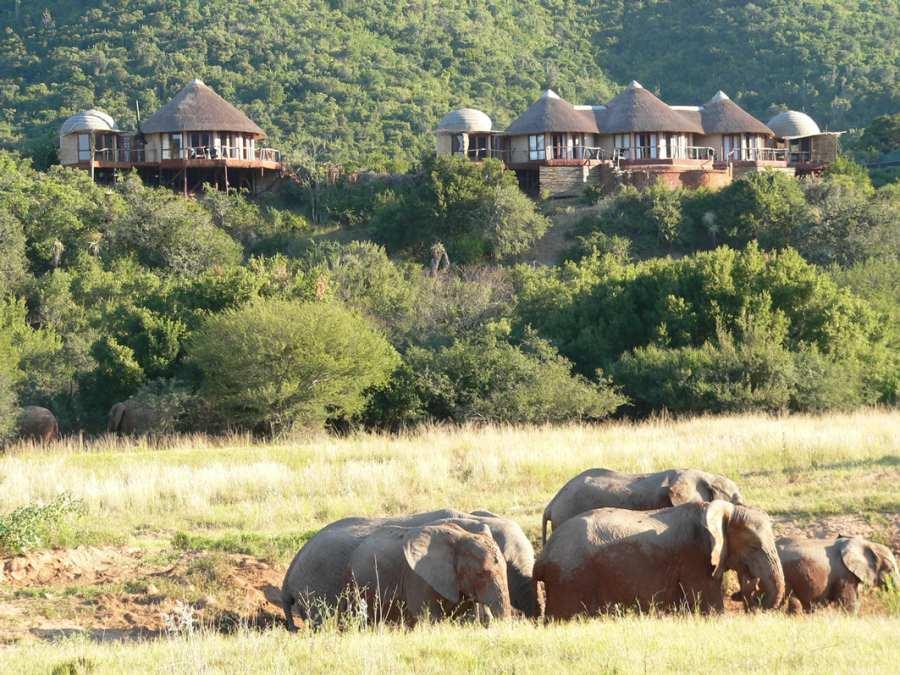 Addo-Elephant-National-Park