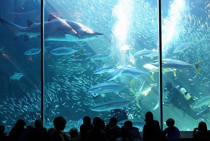 2 Oceans Aquarium- Winter activities for Kids around Cape Town